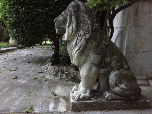 Lion assis